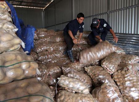 Tiêu hủy 26 tấn khoai tây Trung Quốc nhiễm độc
